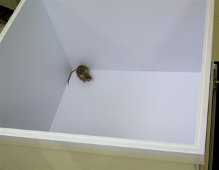 Japan Mouse Clinic